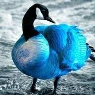 Blaugans